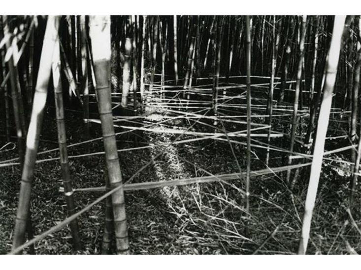 戸谷成雄,竹藪Ⅱ, 1975v